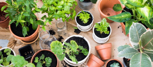 An Easy Guide to Houseplant Care