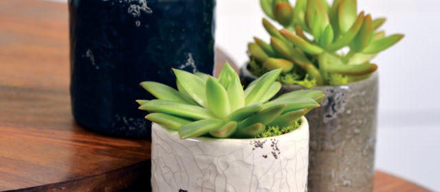 10 Reasons to Give Gift Plants