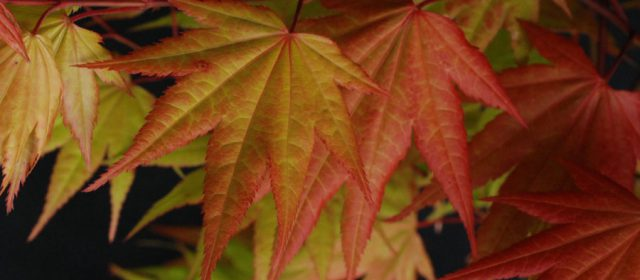 Tips for Planting Trees in the Fall